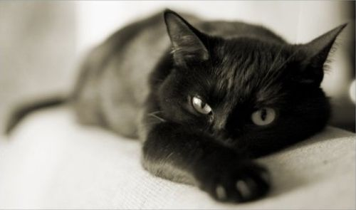 о кошках