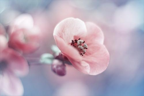 диалог о весне